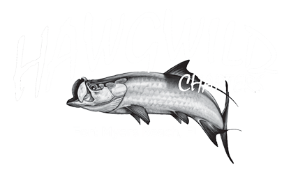 Hawgwild Fishing Charters Company Logo | Fort Myers Fishing Charters: Near Shore Fishing, Deep Sea Fishing & Back Water Fishing