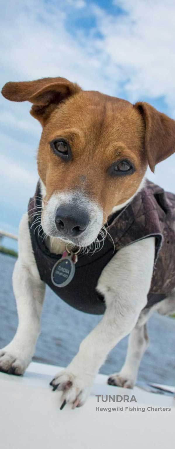 Tundra, Mascot of Hawgwild Fishing Charters | Fort Myers Fishing Charters: Near Shore Fishing, Deep Sea Fishing & Back Water Fishing
